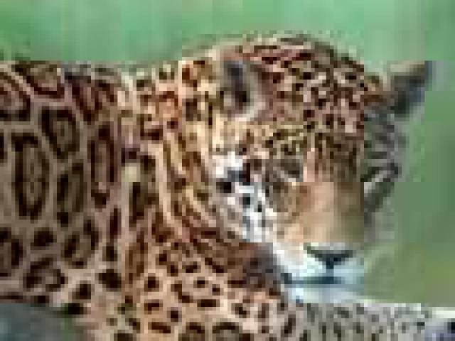 Respeito aos direitos dos animais deve ser reconhecido como potencial turístico