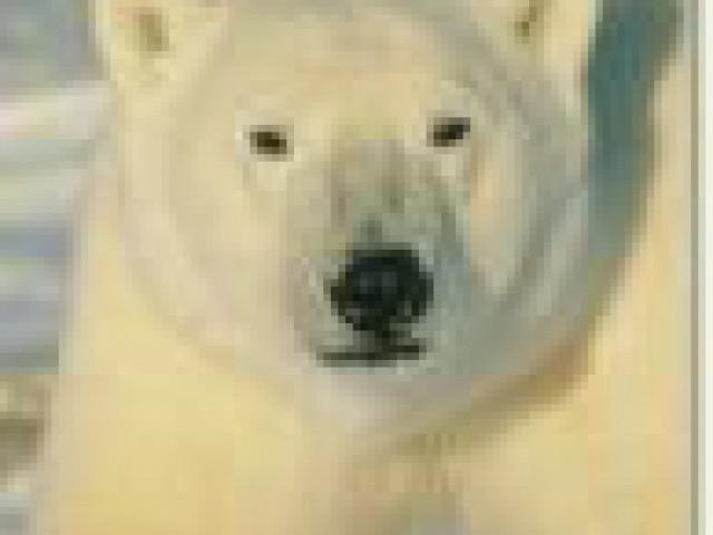 Dez atributos dos verdadeiros protetores dos animais