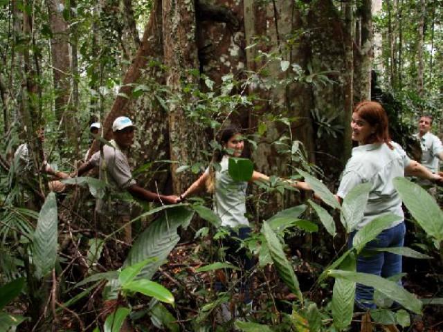 """Árvores centenárias encantam """"plantadores de florestas"""""""