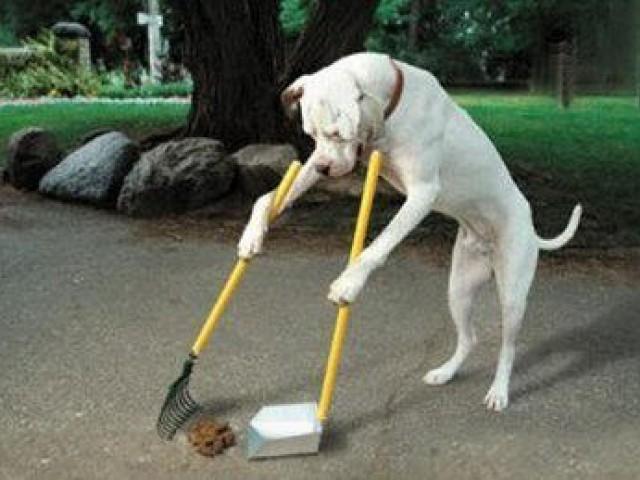 Cães e gatos também podem sofrer de pressão alta