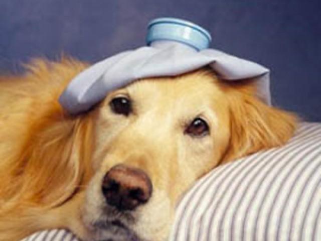 Temporada de verão exige maior proteção para os pets