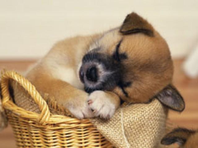 Filhote de cão ou gato pode ser um bom presente?