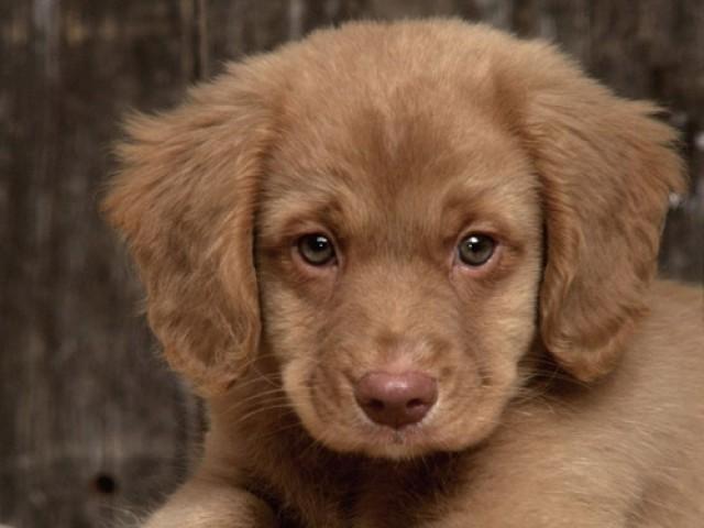 Vômitos frequentes indicam sérios problemas de saúde em cães e gatos