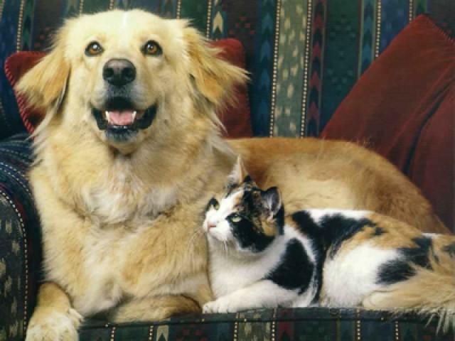 Manter animais em unidades condominiais é exercício regular do direito de propriedade