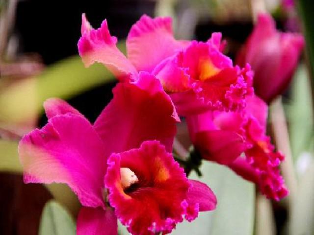 Exposição permanente reúne cerca de 18 mil orquídeas
