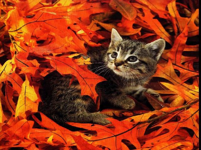 Com crescimento da população de gatos, Conselho Federal de Medicina Veterinária alerta para cuidados com os felinos