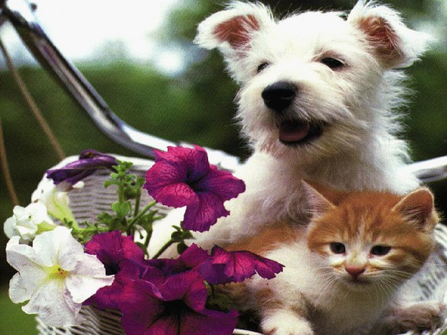 Cães e gatos também sofrem com o calor